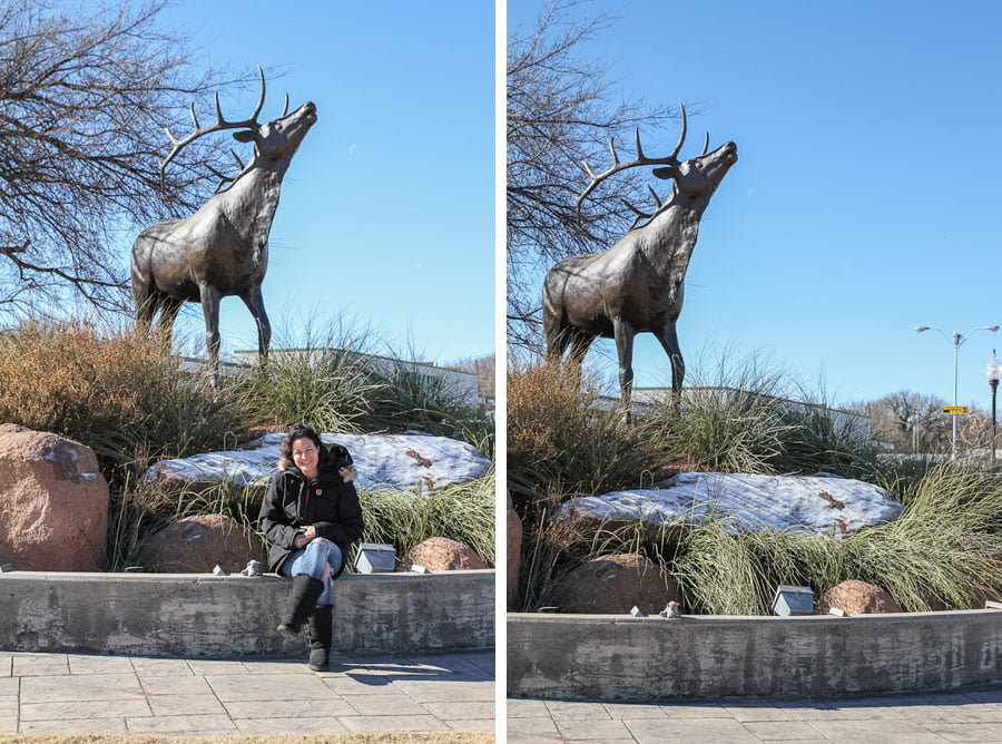 Elk in Elk City